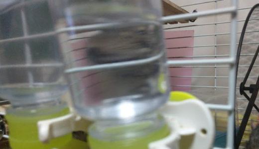 デグーの給水ボトルのおすすめと使い方!交換頻度は?水道水でOK?