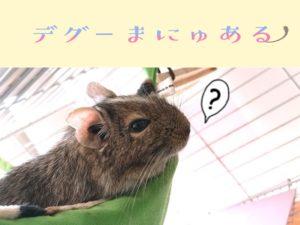 デグーまにゅある~デグー飼育のお助け情報ブログ~